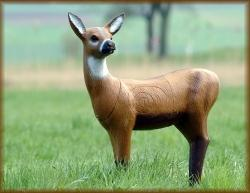 SRT Roe Deer
